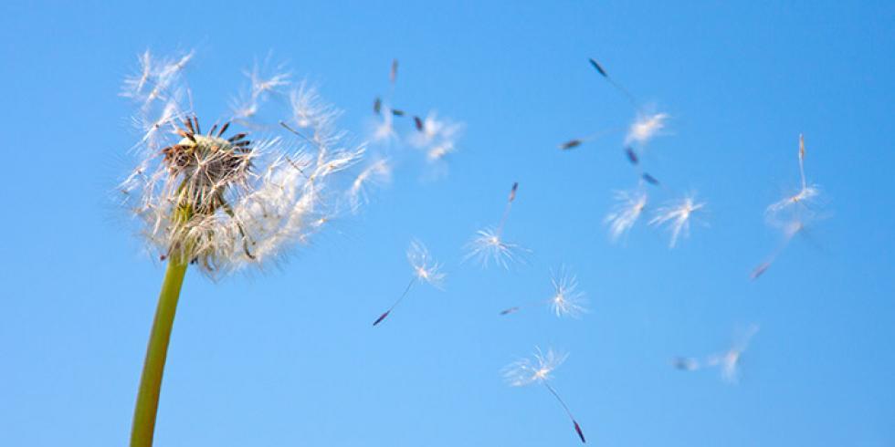 Het allergieseizoen is er weer – hoe herkennen & wat te doen?