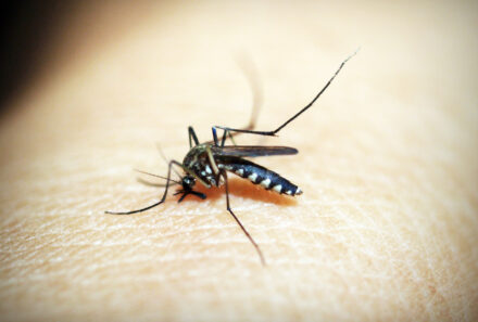 Muggenseizoen – hoe kan je jezelf wapenen?