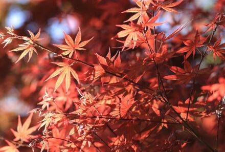 Tips om gezond de herfst door te komen!
